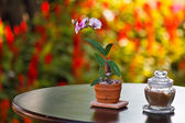 Table with chair in the green garden  — Stock Photo