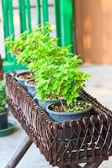 Flowers in a wattled basket  — Stock Photo