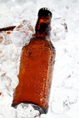 пивные бутылки — Стоковое фото