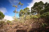 大加那利岛 — 图库照片