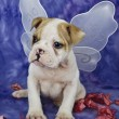 Bulldog Puppy With Angel Wings — Stock Photo