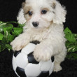 Puppy Soccer Player — Stock Photo