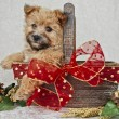 Cute Borwn Chistmas Puppy. — Stock Photo