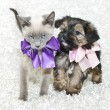 Cute Puppy and Kitten — Stock Photo #35513203