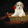 Christmas Puppy — Stock Photo #35513235
