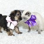 Cute Puppy Telling A Kitten Secrets — Stock Photo #35513259