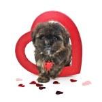 Постер, плакат: Puppy love