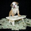 Who Ever Said Money Can't Buy Happiness,Never Bought A Puppy. — Stock Photo #35515497