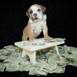 Who Ever Said Money Can't Buy Happiness,Never Bought A Puppy. — Stock fotografie