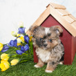 Cute Puppy Peekimg Out of a Dog House. — Stock Photo