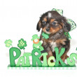 St. Patrick's Day Puppy — Stock Photo