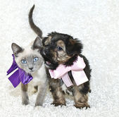 Funny Puppy and Kitten — Stock Photo