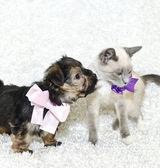 Puppy Kisses — Stock Photo