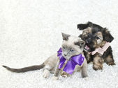 Funny Puppy Wanting To Bite kitty! — Stock Photo