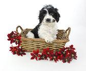 Sweet Black and White puppy — Stockfoto
