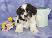 Sweet Brown and White Puppy — Stock Photo