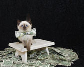 Who Ever Said Money Can't Buy Happiness,Never Bought A Kitten — Stock Photo