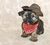 Cowboy Puppy — Stock Photo