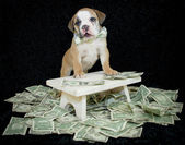 Who Ever Said Money Can't Buy Happiness,Never Bought A Puppy. — Stock Photo