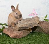 Söt kanin och fjäril. — Stockfoto