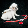 Cupid Puppy — Stock Photo