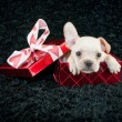 Stock Photo: Valentine Puppy