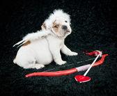 Cupid Puppy — Stock Photo