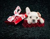 Valentine Puppy — Stock Photo