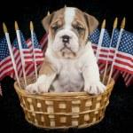 U.S.A. Puppy — Stock Photo #41934289