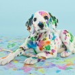 Painted Puppy — Stock Photo
