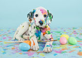 Easter Dalmatain Puppy — Stock Photo