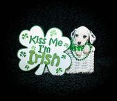 St. Patrick's Day Puppy — Stock Photo