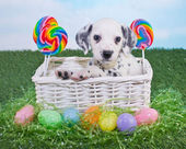 Easter Puppy — Photo