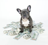 How Much is a Puppy Worth? — Stock Photo