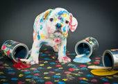 Painted Pooch — Stock Photo
