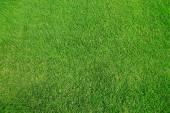 背景の緑の草のテクスチャ — ストック写真