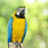 Parrot bird sitting on the perch — Stock Photo