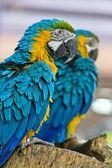 Parrot bird sitting on the perch — Stock Photo