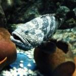������, ������: Fish aquarium oceanariums sea fish turtle clown fish Nemo