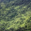 Tropical rainforest ,Bird eye view — Stock Photo