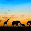 Silhouette elephant and giraffes in the sunset — Stock Photo
