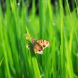 Butterfly in green field — Stock Photo