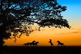 Horse over sunset — Stock Photo
