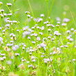 Meadow — Stock Photo #36612373