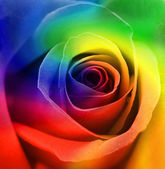 Rainbow Roses Background — Stock Photo