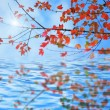 Stock fotografie: Autumn leaves reflecting in water
