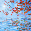 Autumn leaves reflecting in the water — Stock Photo