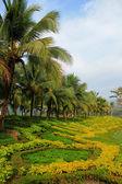 Tropická zahrada — Stock fotografie