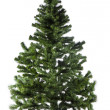 Christmas tree without decoration — Stock Photo