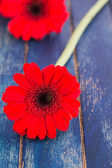 Gerber flowers on a wooden surface — Stock Photo
